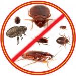 Какие насекомые кусают людей в квартире