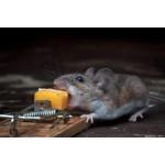 Уничтожение мышей и какой от них вред