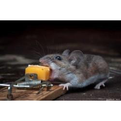 Уничтожение и обработка от мышей в Москве и Московской области