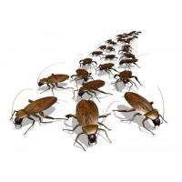 Установка барьера от тараканов, клопов, муравьев