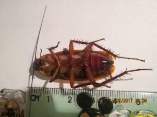 Мутация тараканов