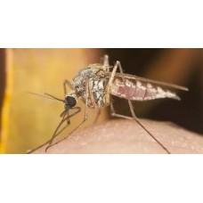 Профессиональное уничтожение комаров в Москве и области с гарантией
