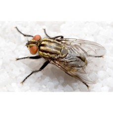 Профессиональное уничтожение мух в Москве и области с гарантией