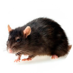 Борьба с крысами