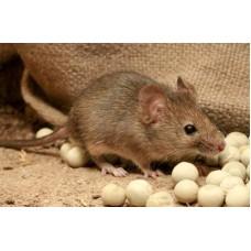 Профессиональное уничтожение мышей в Москве и области с гарантией
