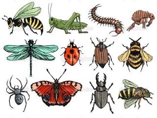 В Москве и Московской области появился новый вид насекомых