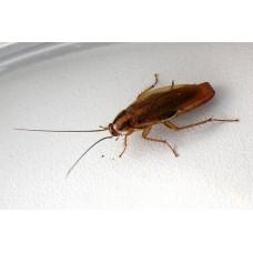 Профессиональное уничтожение тараканов в квартире в Москве и области с гарантией