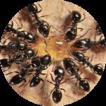 Методы борьбы с муравьями. Как избавиться от муравьев