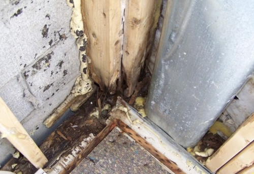 Как избавиться от грибка на стенах в квартире народными средствами